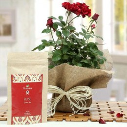 Rose Plant With Rose Tea