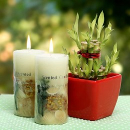 Lucky Bamboo With Scented Candle