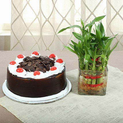 Eggless Blackforest Cake With Two Layer Bamboo