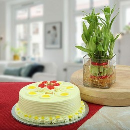 Eggless Butterscotch Cake N Bamboo Plant