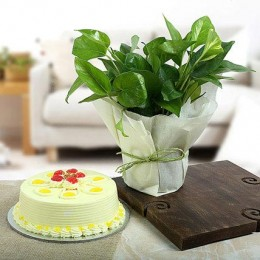 Eggless Butterscotch Cake N Money Plant