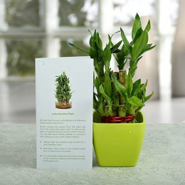Two layer Bamboo Plant Standard