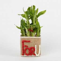 Two Layer Lucky Bamboo in a Glass Vase For U
