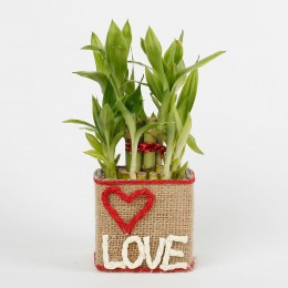 Two Layer Lucky Bamboo in a Glass Vase Love