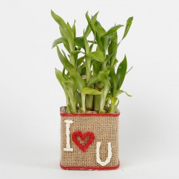 Two Layer Lucky Bamboo in a Glass Vase I Love You