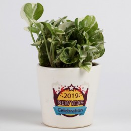 White Pothos in Printed Ceramic Pot for New Year