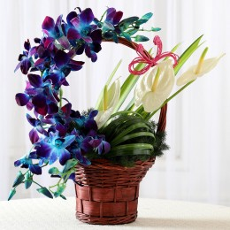Basket of Purple Orchids & Anthuriums