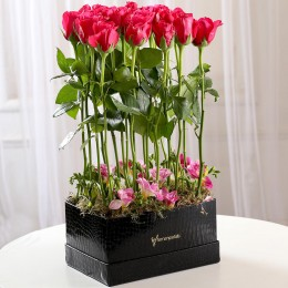 Long Stemmed Dark Pink Roses Arrangement