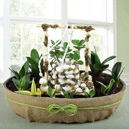White Well Plant Arrangement