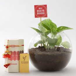 Money Plant Terrarium With Rakhi Lumba Set