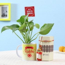 Money Plant With Rakhi Lumba Combo