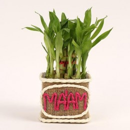 2 Layer Lucky Bamboo Plant for Mam